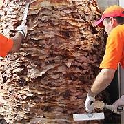 Le plus gros kebab du monde